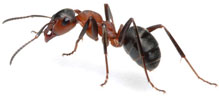 photo of an ant